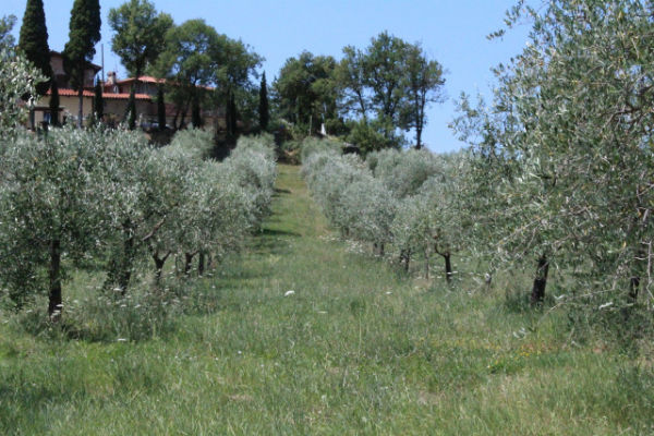  Extra Virgin Olive Oil Producers