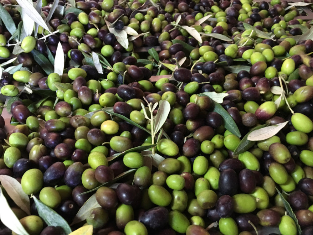 Extra Virgin Olive Oil properties