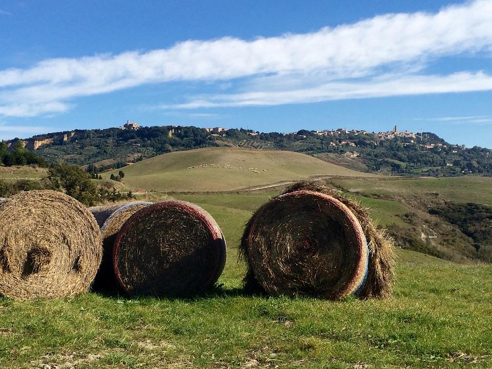 Tuscan nature vacations of Villa Campestri Olive Oil Resort