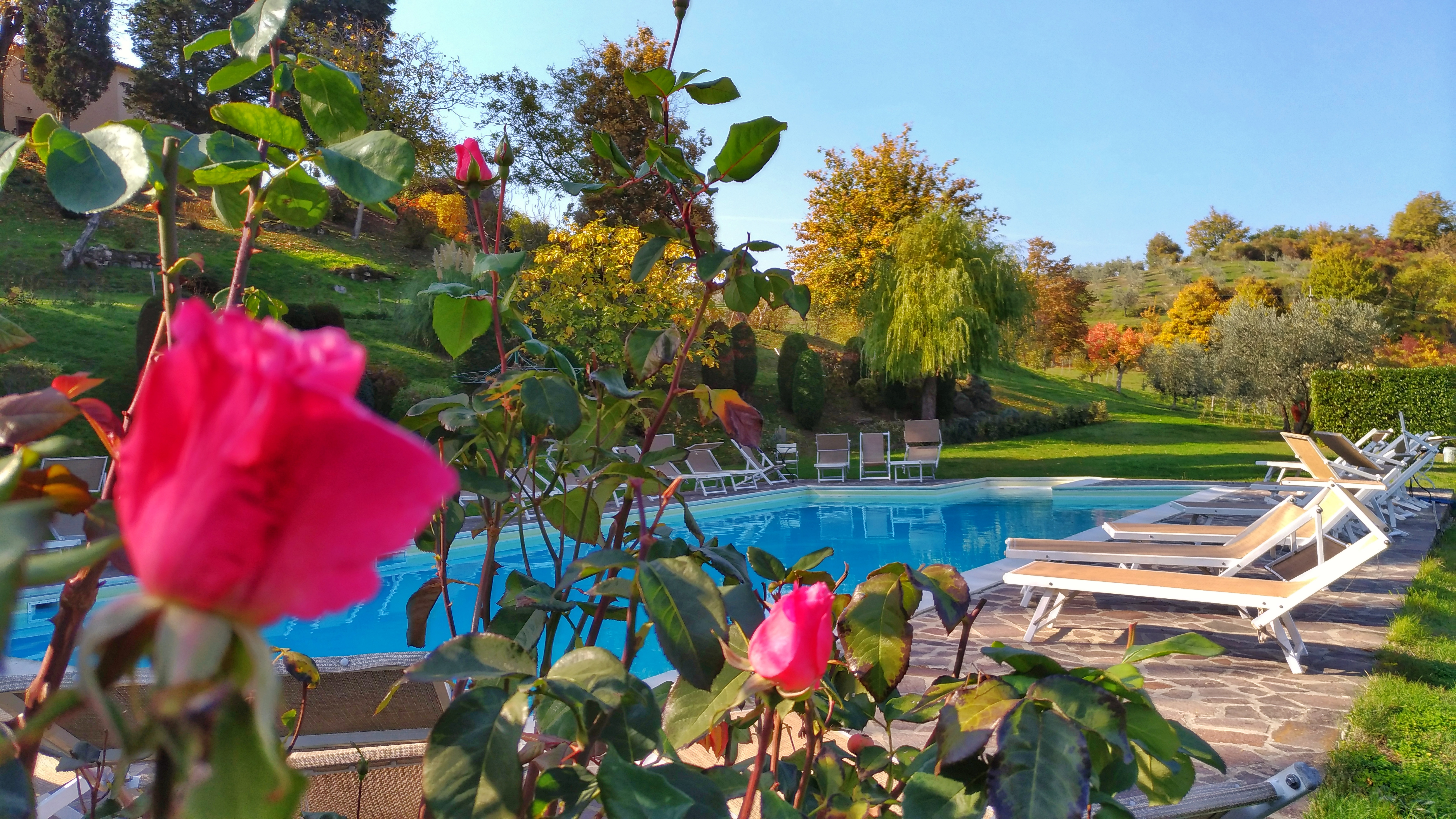 Luxury resort in Tuscany for connoisseurs of Villa Campestri Olive Oil Resort