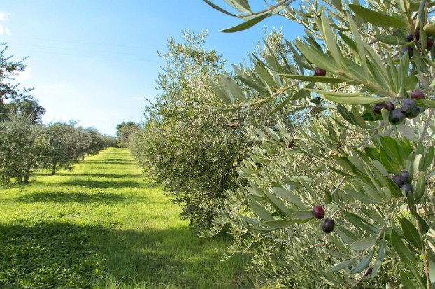 The best producers of extra virgin olive oil according to Villa Campestri Oil Resort
