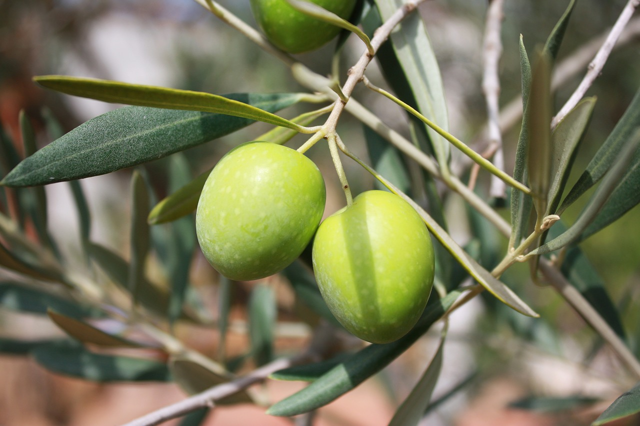 Where to buy extra virgin olive oil in Tuscany