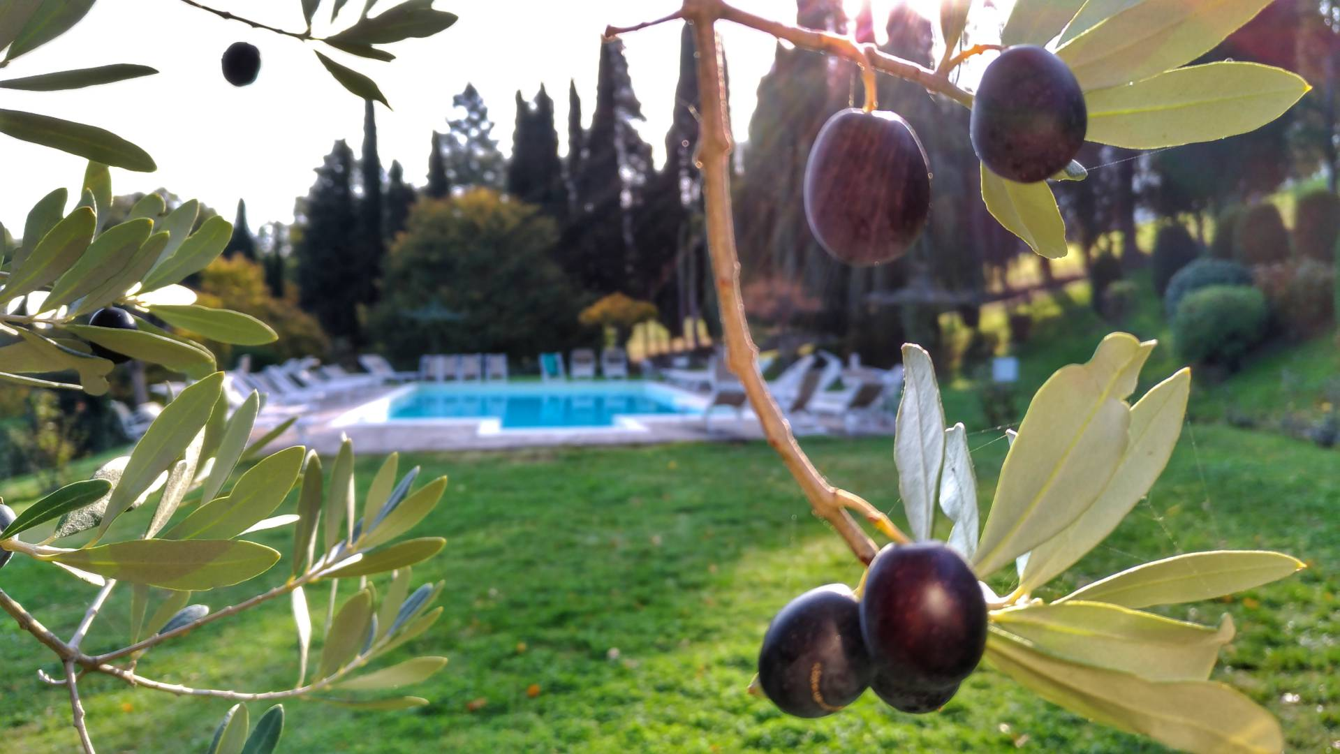 La vacanza in Toscana a Villa Campestri Olive Oil Resort
